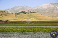 Fioritura Castelluccio di Norcia   Click in Umbria - Turismo fotografico