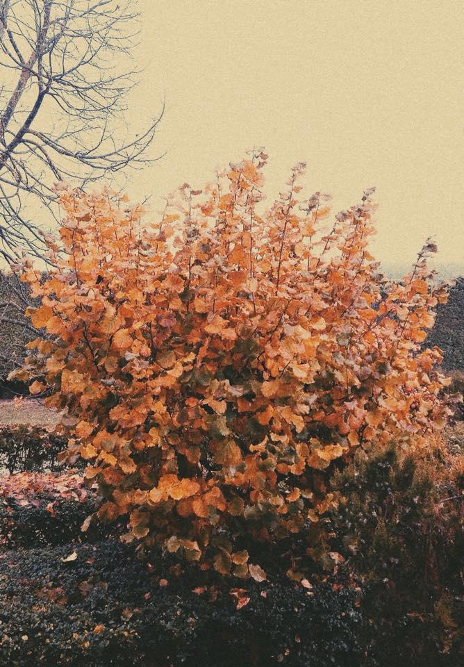 WORKSHOP FOTOGRAFICO Foliage d'autunno